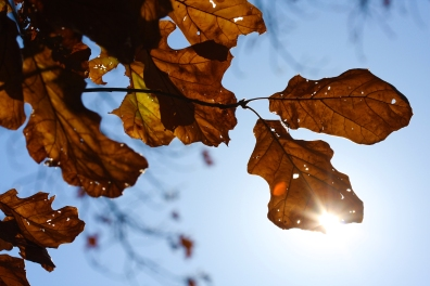 IMG_oakleaves with flare